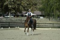 canter pirouette2